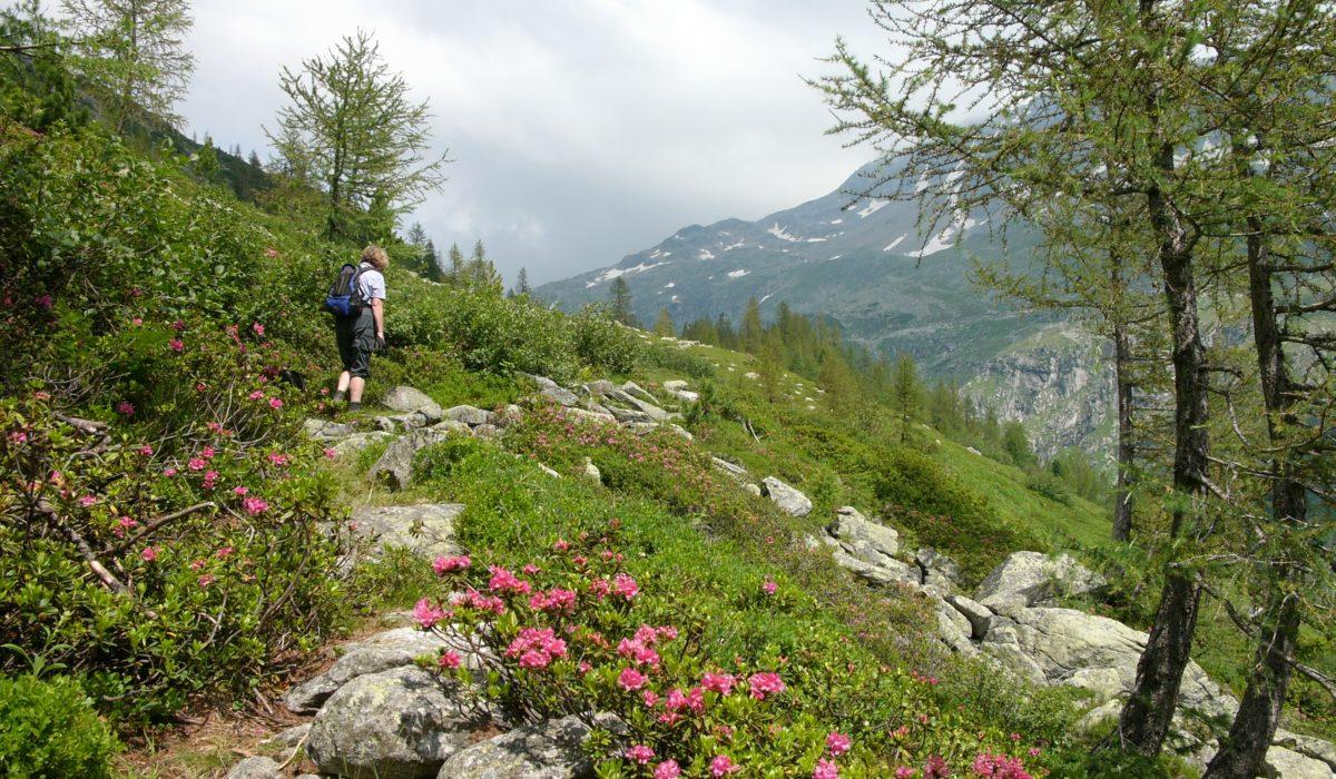 Richard-Helfer-Weg Mölltaler Gletscher